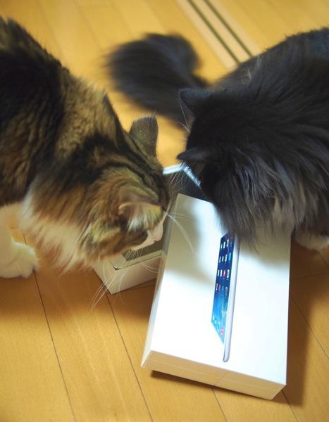 iPad mini Retinaを襲うがじぇにゃんず1号2号