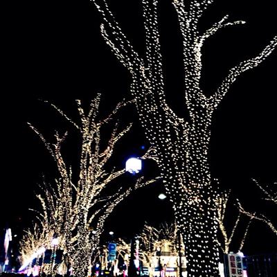 表参道の街路樹のイルミネーション