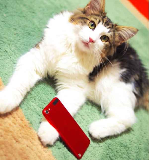 iPod touch(5th gen.)とガジェにゃんず2号